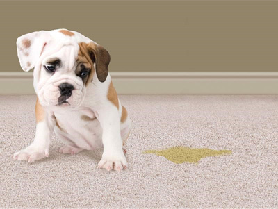 Pet Stains Odor Removal Safe Dry Carpet Cleaning